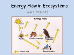 Energy_Flow_in_Ecosystems