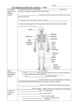 The Skeletal and Muscular Systems – notes