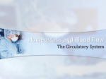 Homeostasis and Blood Flow