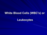 White Blood Cells (WBC`s) or Leukocytes