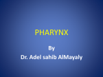 Wall of pharynx A
