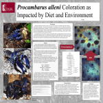 Procambarus alleni Coloration as Impacted by Diet