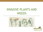 Invasive Plants and Weeds