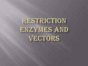 RESTRICTION ENZYMES AND VECTORS
