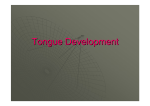 lec.3 Tongue Development