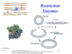 Restriction Enzymes - mvhs