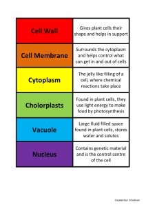 Cell Wall Cell Membrane Cytoplasm Cholorplasts Vacuole Nucleus