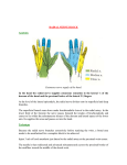 Nerve Block Radial - Developinganaesthesia