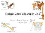 Pectoral Girdle and Upper Limb