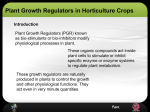 Role of Plant Growth Regulator in Horticulture Nursery