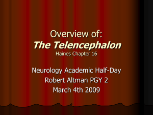 AHD The Telencephalon R. Altman 4-03