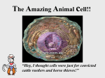 The Amazing Animal cell!!