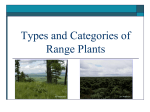 Types and Categories of Plants