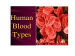 blood types pp