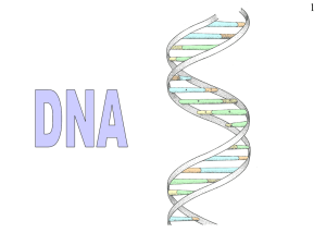 DNA . ppt - biology