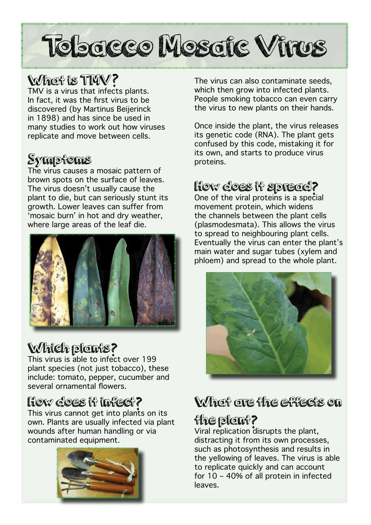 Tobacco Mosaic Virus Information Sheet