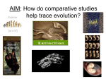 How do comparative studies help trace evolution?