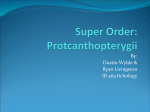 ProtcanthopterygiiPresentation