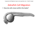 Inexpensive Cell Migration- Pre-lab presentation