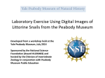 Laboratory Exercise - Yale Peabody Museum of Natural History