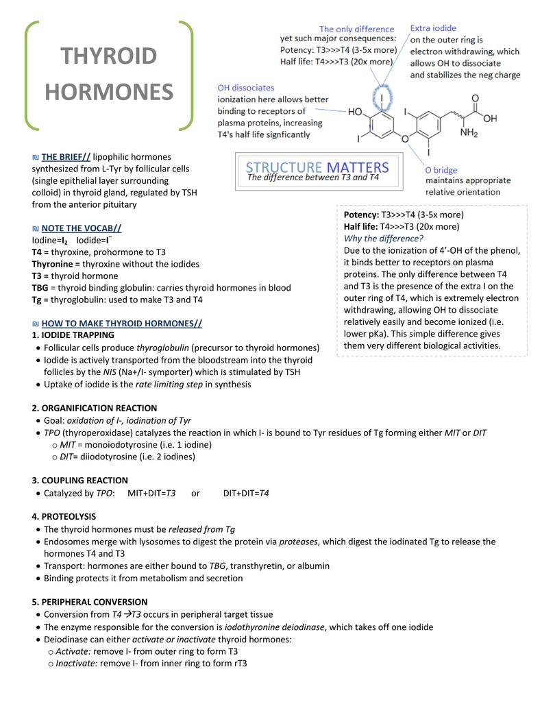 Thyroid Hormones Rx Study Guides