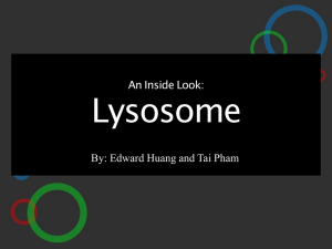 An Inside Look: Lysosome