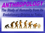 anthropology - B