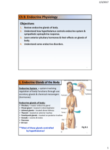 1. Endocrine Glands of the Body