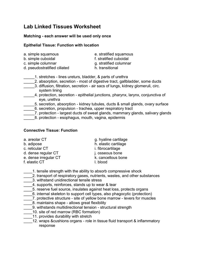 Epithelial Tissue Worksheet Answers   Worksheet List