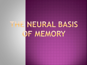 The Neural Basis Of Memory