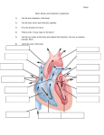 Heart, blood, and circulation Assignment