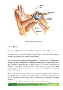 A diagram of the ear`s structure THE OUTER EAR The outer ear