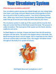 What does your circulatory system do?