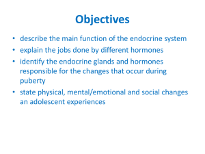Endocrine System Puberty PowerPoint
