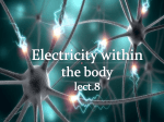 Electricity within the body