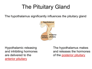 17. Pituitary and Adrenal Glands