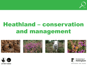 Heathland conservation and management