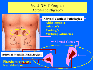 CSTCC NMT Program Adrenal Scintigraphy