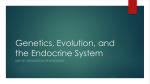 Genetics, Evolution, and the Endocrine System