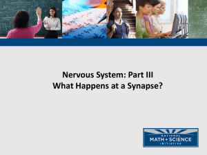 NMSI - 3 What happens at a synapse