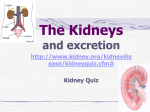 Chapter 9 The Kidneys and Excretion