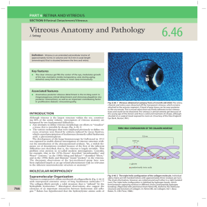 Vitreous Anatomy and Pathology