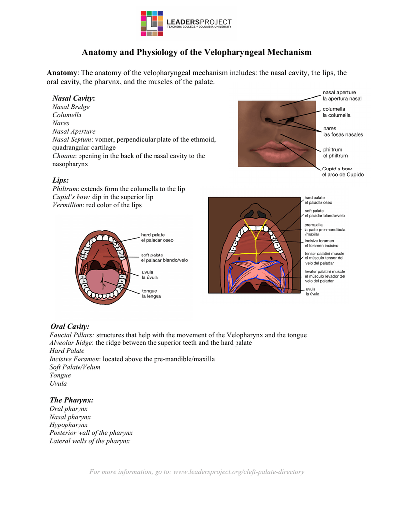 Anatomy and Physiology of the Velopharyngeal