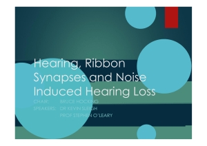 Hearing, Ribbon Synapses and Noise Induced Hearing Loss