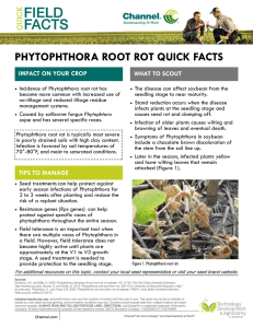 Phytophthora Root Rot Quick Facts