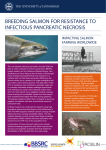 breeding salmon for resistance to infectious pancreatic necrosis