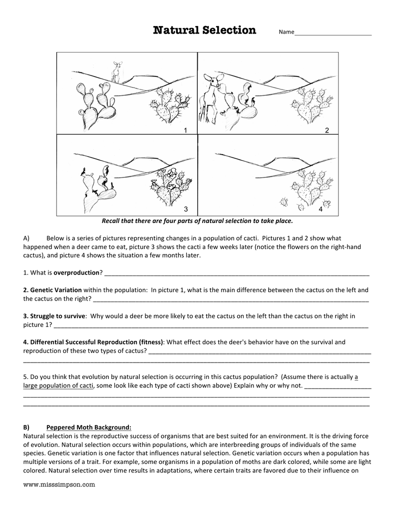 good evolution by natural selection worksheet. Black Bedroom Furniture Sets. Home Design Ideas