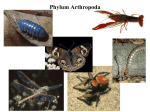 Phylum Arthropoda: Arthropods (crustaceans, spiders, insects)