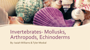 Invertebrates- Mollusks, Arthropods, Echinoderms By: Isaiah
