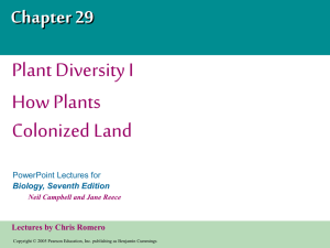 How Plants Colonized Land PowerPoint